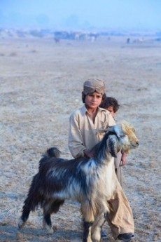 Balochi goatherders, Pakistan [Source: Flickr-Nadeem Khawar] - ABC Translations