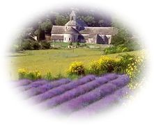 French lavender fields - abc Translations